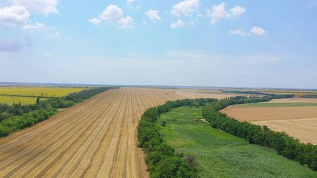 Aerial view of a field of wheat. Harvesting