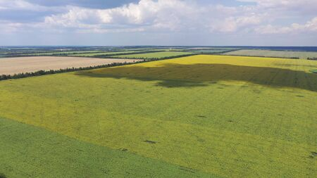 A field of sunflower aerial view.