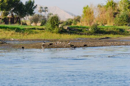 Birds on the banks of the Nile River in Egypt.