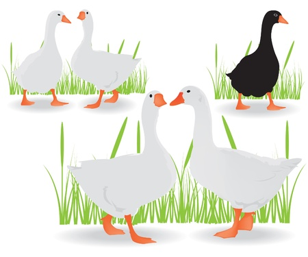 Geese black and white Vector