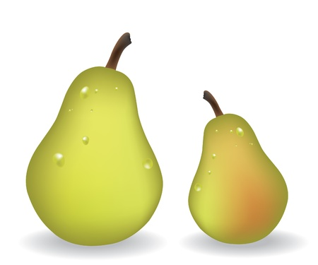Pears illustration Illustration