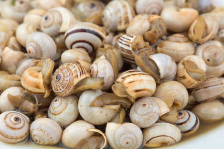 seasoned: seasoned boiled snails - traditional dish from Southern Europe