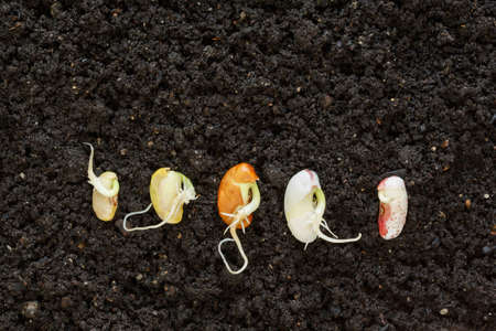 different been seeds germinating in soil  photo