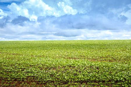 green field: Soy bean plantation in Brazil, South America