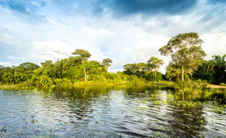 wetlands: Wetlands in Pantanal, South America, Brazil Stock Photo