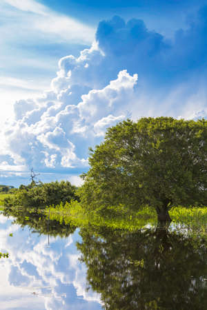 Wetlands in Pantanal, South America, Brazil Stock Photo