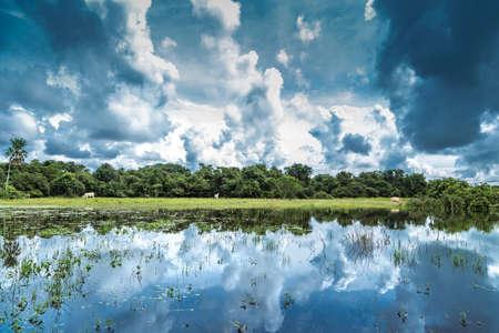 south  america: Los humedales de Pantanal, América del Sur, Brasil