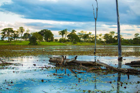 river water: Amazing Pantanal River - Pantanal is one of the worlds largest tropical wetland areas located in Brazil , South America