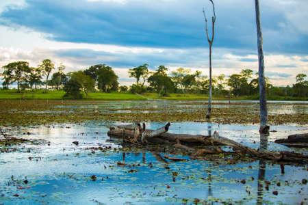 rio amazonas: Increíble Río Pantanal - Pantanal es una de las mayores zonas de humedales tropicales del mundo ubicados en Brasil, América del Sur