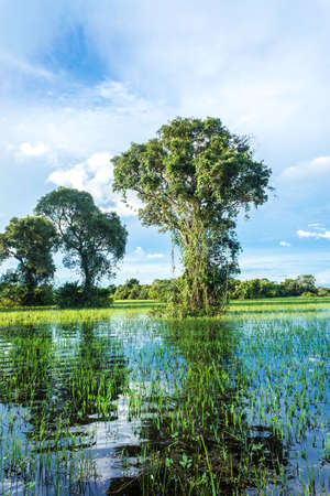 wetland: Pantanal in Mato Grosso. The Pantanal is one of the worlds largest tropical wetland areas located in Brazil , South America