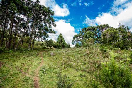 south  america: campo de Minas Gerais en Brasil, América del Sur