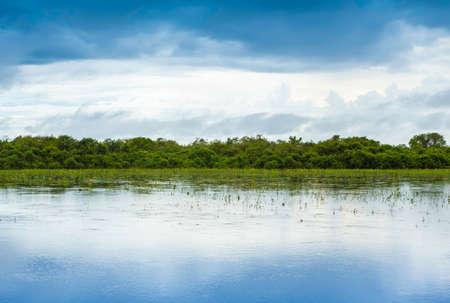 amazonas: Pantanal in Mato Grosso Stock Photo