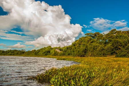 forest river: Amazing landscape in Pantanal