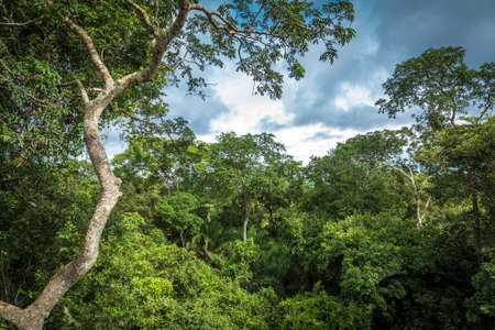 amazon rainforest: Rainforest in Pantanal, Brazil