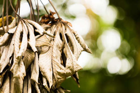 amazon forest: Dried leaves in the amazon forest Stock Photo