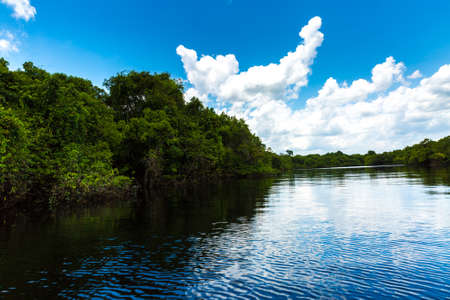 wetlands: The Amazon wetlands in Brazil Stock Photo