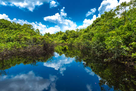 adventure holiday: Wetland in Amazon, Brazil, South America Stock Photo