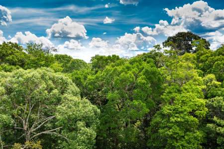 amazon forest: The Amazon forest in Brazil Stock Photo