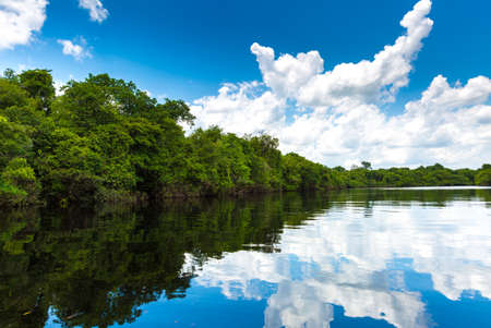 nature landscape: The nature in Pantanal, Brazil Stock Photo