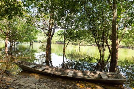 wetland: The Amazon wetlands in Brazil Stock Photo