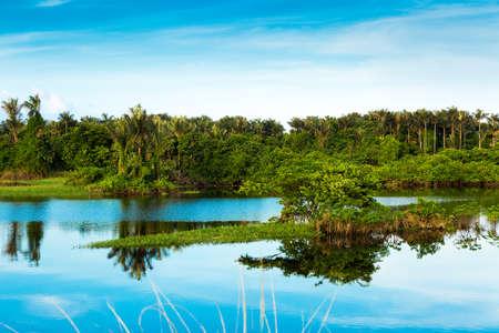 rio amazonas: Humedal en Amazonas, Brasil, América del Sur