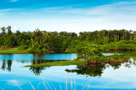 Wetland in Amazon, Brazil, South America Stock Photo