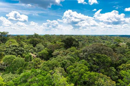 rainforest tree: Pantantal Landscape in Brazil, Latin America Stock Photo