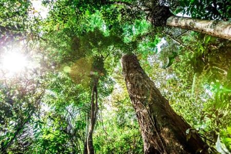 The Amazon Rainforest, Brazil, South America