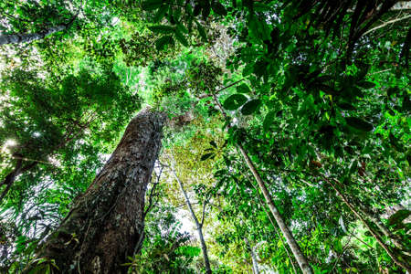 rainforest: Rainforest in nature Stock Photo