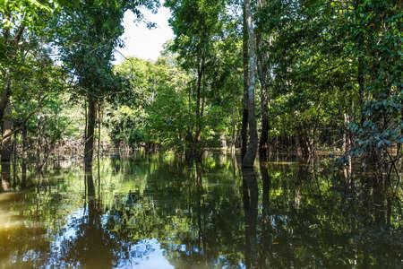 wetland: Wetland in Amazon, Brazil
