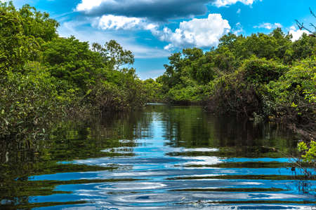 rio amazonas: Humedal en Amazonas, Brasil