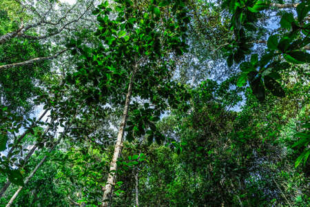 amazon rainforest: Amazon Rainforest, Brazil Stock Photo