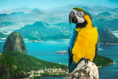 Blue and Yellow Macaw in Rio de Janeiro, Brazil Stock Photo