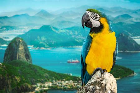 rio amazonas: Macaw azul y amarillo en de Janeiro, Brasil