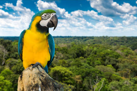 rainforest: Blue and Yellow Macaw on the nature Stock Photo