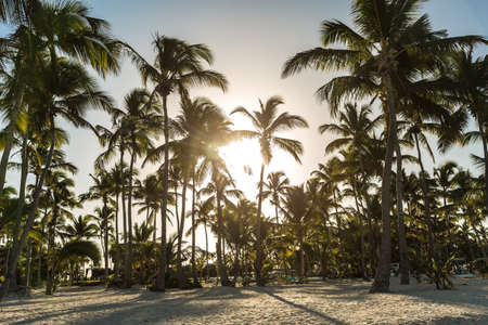 sandal tree: Tropical beach in a sunny day