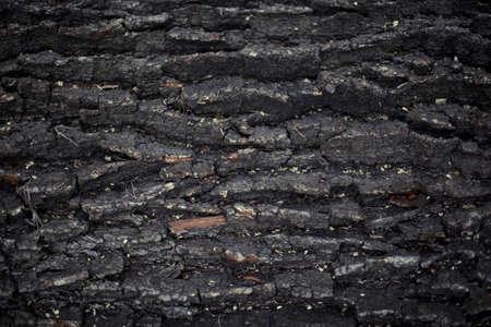 dark texture: La corteza de roble de cerca la textura oscura Foto de archivo