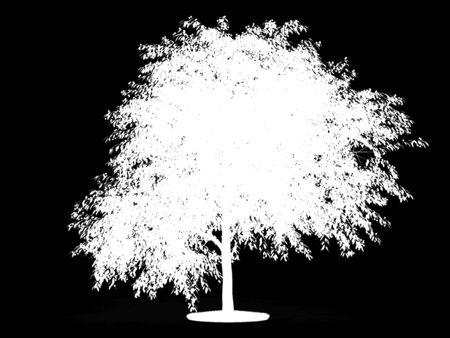 Alpha channel for cherry tree Reklamní fotografie