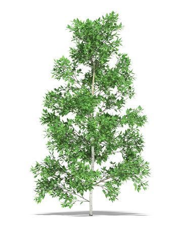 metre: Birch one metre on a white background. Its 3D image. Stock Photo