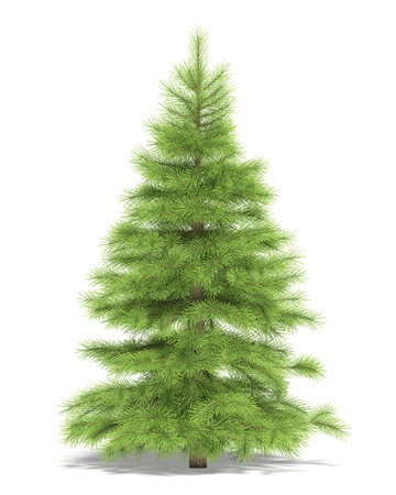 picea: Small spruce on a white background. Its 3D image.