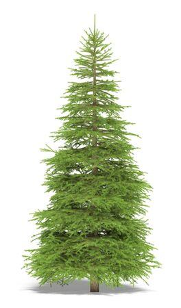 Picea grande sobre un fondo blanco. Es la imagen 3D.