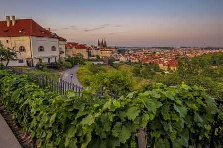 View of the Prague Castle and Old Town from Strahov Monastery on the Lesser Town (Mala Strana) district with vineyard in front at sunset. Prague, Czech Republic Stock Photo