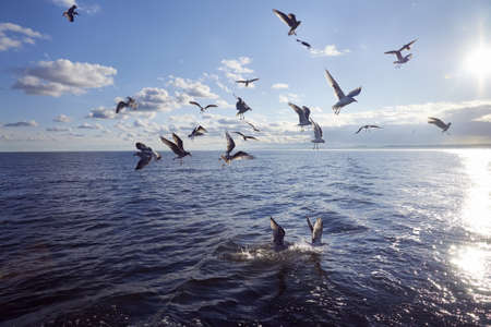 Group of seagull feeding in sea Stock Photo