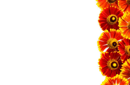 Orange gerbera daisy flowers border. Backdrop with copy space. Flat lay, top view Stock fotó