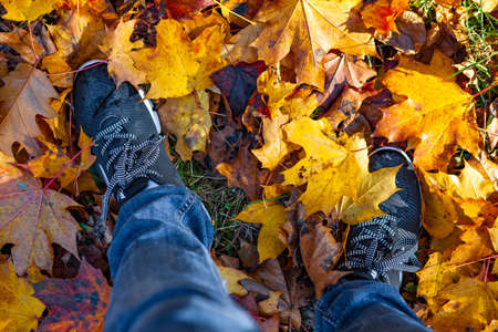 Legs in sneakers and jeans standing on ground with autumn leaves Stockfoto