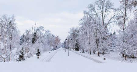 Winter park. Panorama view Standard-Bild - 140372608