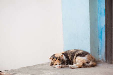 colored cat sleeping on the doorstep of the house Stok Fotoğraf