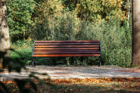 Wooden bench in the park Banque d'images