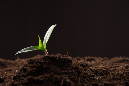 Green young sprout growing in good brown soil. New life concept Stock Photo
