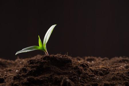 Groene jonge spruit groeit in goede bruine grond. Nieuw leven concept